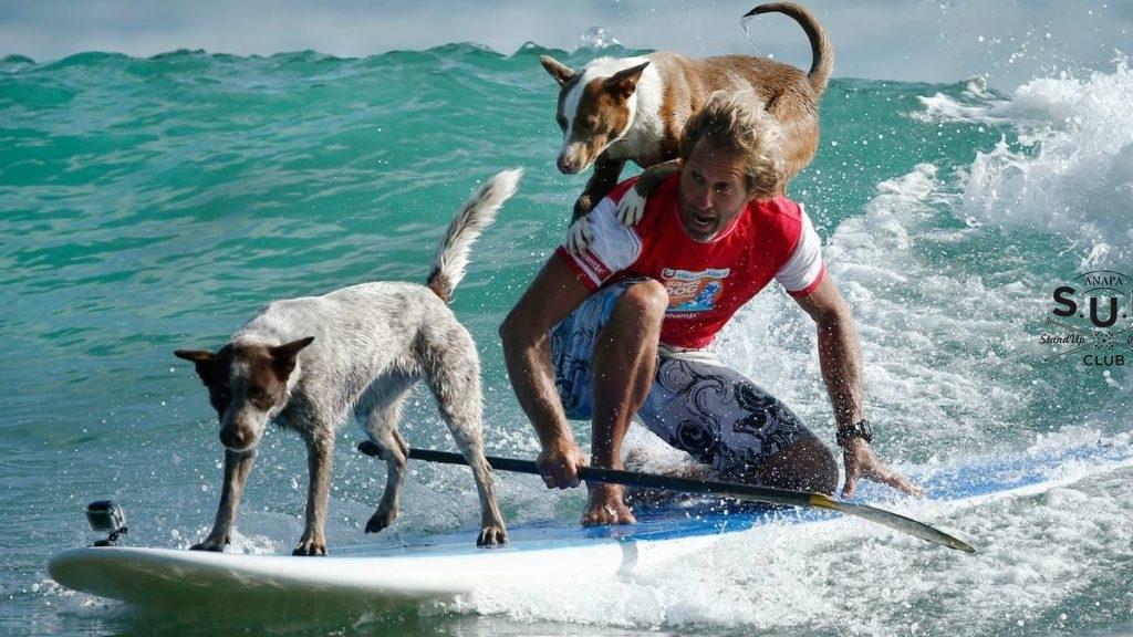 Почему стоит заняться SUP сёрфингом?